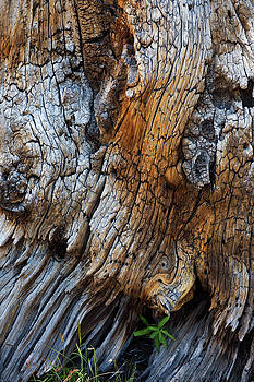 Bark Detail by David Lunde