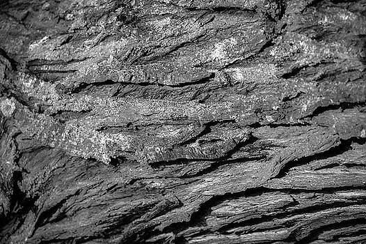 Bark #g9 by Leif Sohlman
