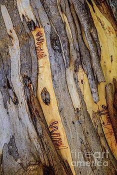 Bark NNP03 by Werner Padarin