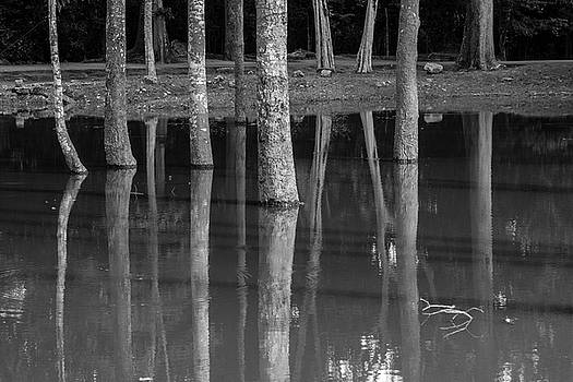 Bark reflection by Hitendra SINKAR