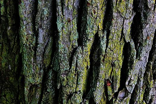 Bark Softly by Toni Jackson