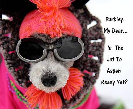 Barkley My Dear by Fiona Kennard