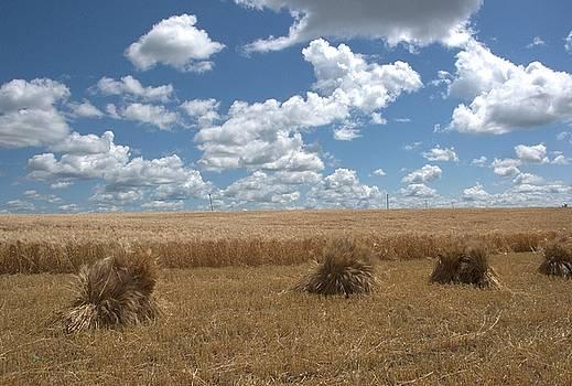 Valerie Kirkwood - Barley Stooks and Scenic sky