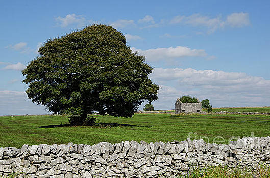 Barn and tree by Steev Stamford