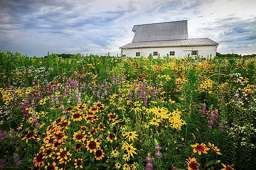 Ron Pate - Barn and Wildflowers