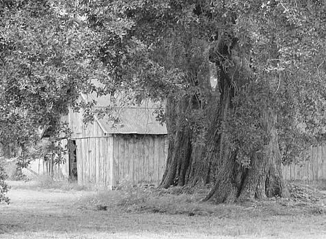 Barn by the Oaks by Ramona Barnhill