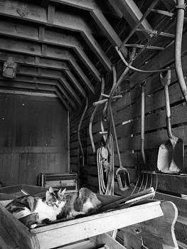 Barn Cats by Caryl J Bohn