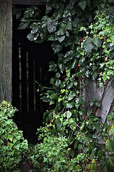 Barn Door Vines by Scott Fracasso