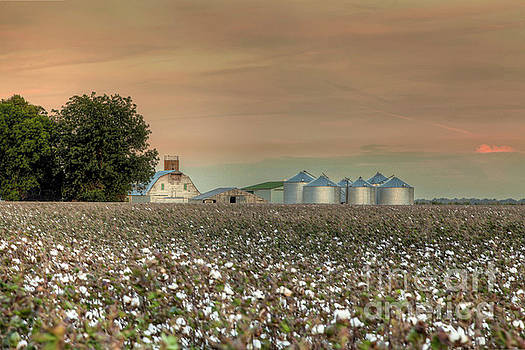 Larry Braun - Barn in a Cotton Field