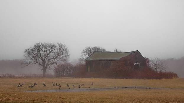 Barn in Fog - Color by Kirkodd Photography Of New England