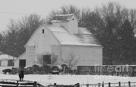 Barn of Beauty by J L Zarek