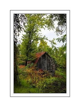 Barn Overgrown 2 by Scott Fracasso