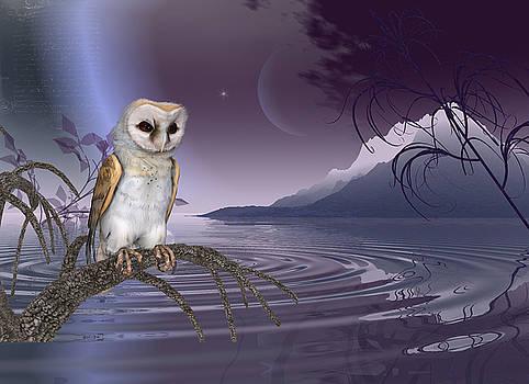 Barn Owl by the lake by John Junek