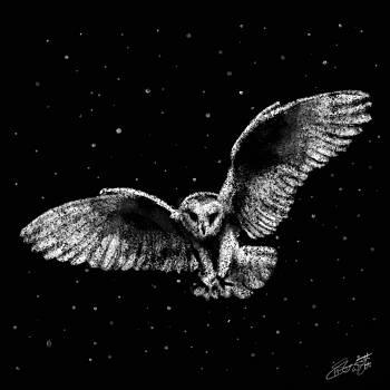 Barn Owl by Hannah Starrett Wright