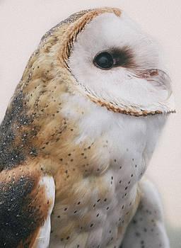Barn Owl by Ian Harland