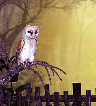 John Junek - Barn Owl