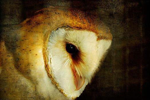 Lois Bryan - Barn Owl