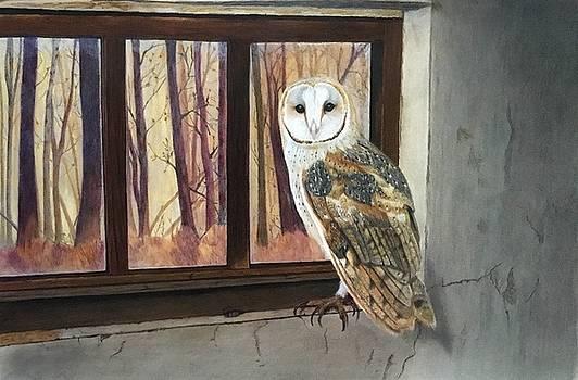 Barn Owl by Michelle McAdams