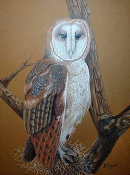 Barn Owl on tree by Joan Mansson