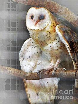 Barn Owl by Robert Ball