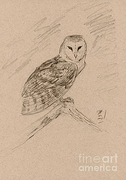 Barn Owl Sketch by Brandy Woods