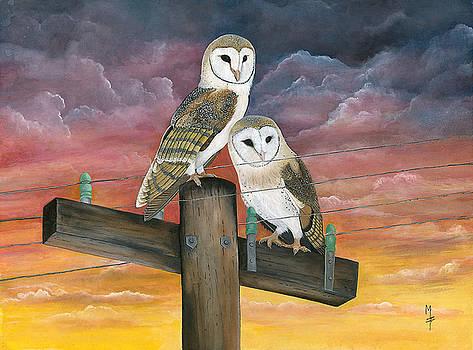 Barn Owls by Marsha Friedman