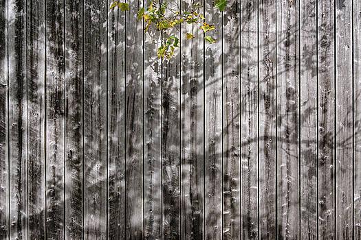 Barn Shadows by Glenn DiPaola