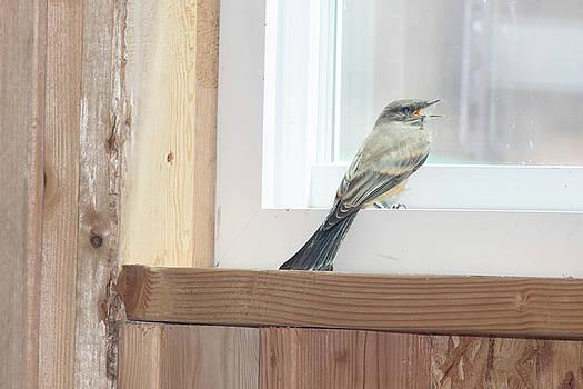 Barn Sparrow by Jodi Vetter