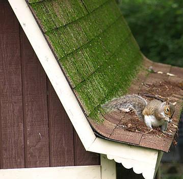 Barn Squirrel by Kim