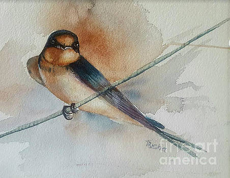 Barn swallow by Patricia Pushaw