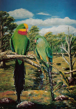 Barraband Parrots by Peter Jean Caley