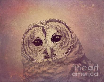 Barred Owl 2 by Chris Scroggins