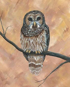 Barred Owl by Christine StPierre