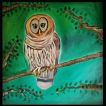 Barred Owl by Christopher Hawke