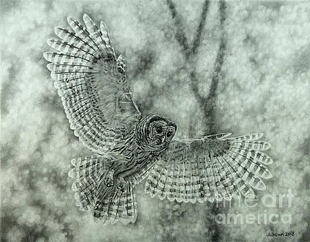 Barred Owl by Jennifer Watson