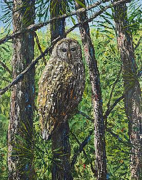 Barred Owl by Joe Mckinney