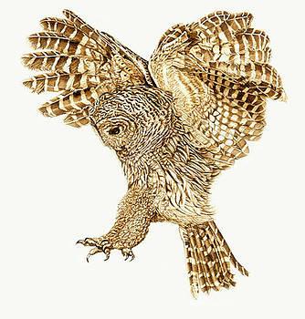 Barred Owl Landing by Cate McCauley