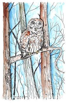 Barred Owl by Patrick Grills