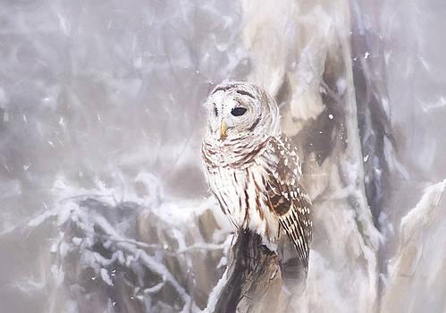 Barred Owl Series 1 by Greg Grupenhof
