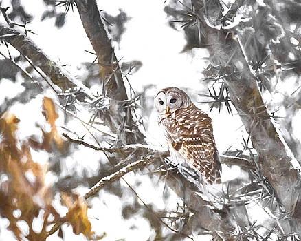 Barred Owl Series 3 by Greg Grupenhof