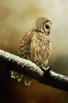 TnBackroadsPhotos - Barred Owl