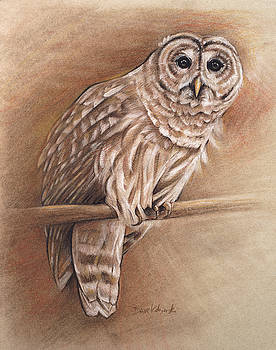 Barred Owl - Wildlife Drawing by Dave Kobrenski