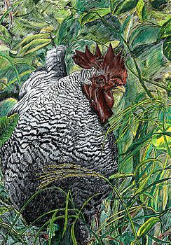 Barred Rock by Tosha Wise