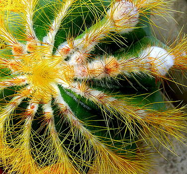 Barrel Cactus by Cheryl Ehlers