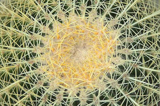 Barrel Cactus by Rick Mutaw