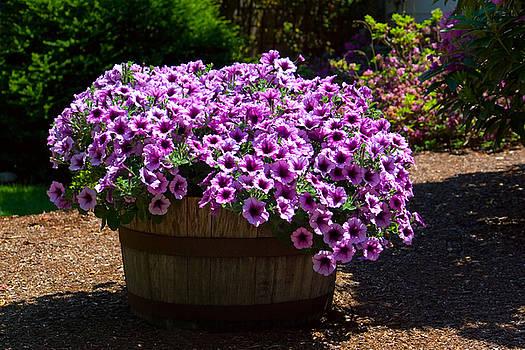 Barrel of Purple Petunias by Stacey Lynn Payne