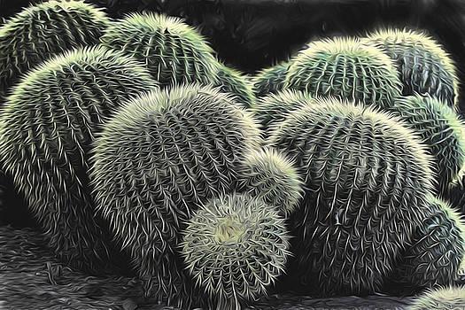 Barrels of Cactus by David Kehrli
