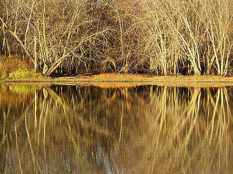 Barren Reflections by Lori Frisch