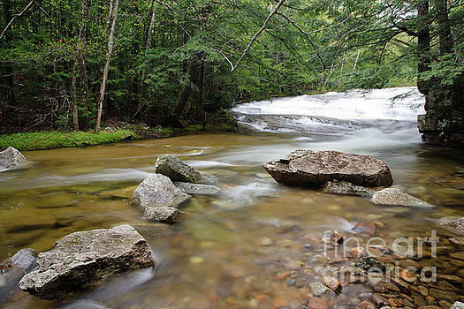 Erin Paul Donovan - Bartlett Experimental Forest - Bartlett New Hampshire USA