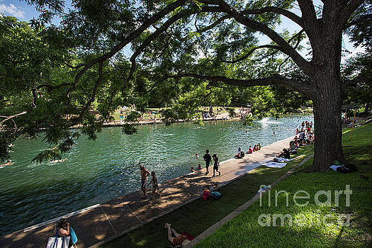 Herronstock Prints - Barton Springs Pool is a shady grove of live oak trees dating ba